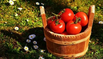 tomatoes-2176846_1920