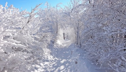 winter-881841_960_720