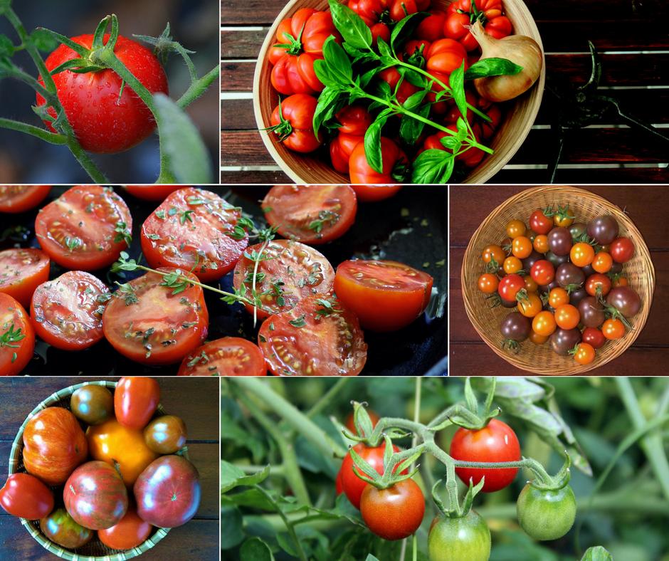 Pomidory - niezastąpione w każdej kuchni