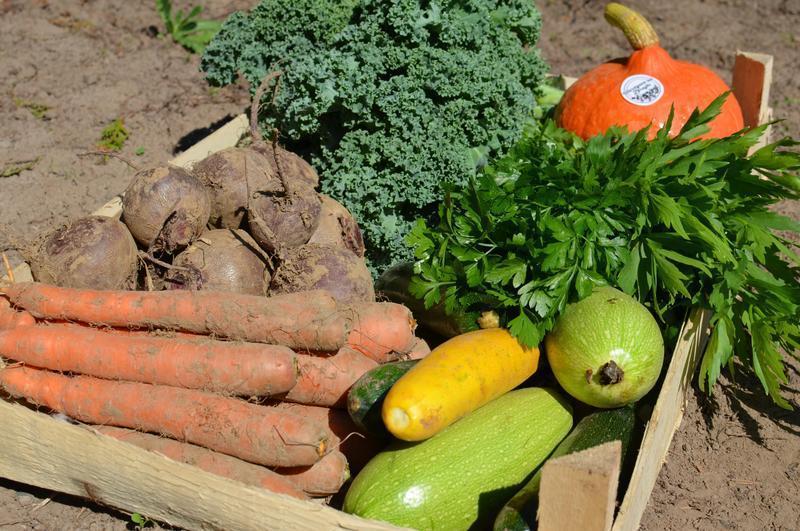 Paczka warzyw od Rolnika z Krakowa