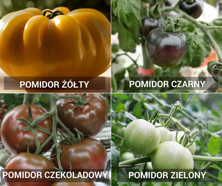 Odmiany pomidorów ze względu na kolor