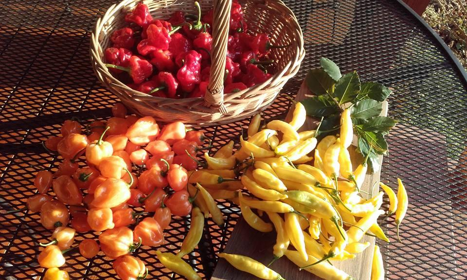 Producent ChilliSmak - zdrowa żywność blisko Ciebie