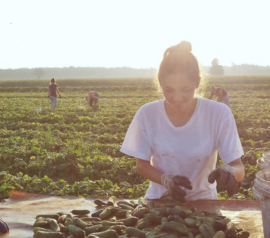 Producent Gospodarstwo Ekologiczne Jany - zdrowa żywność blisko Ciebie