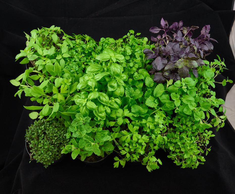 Producent Ziołowy Ogródek - zdrowa żywność blisko Ciebie