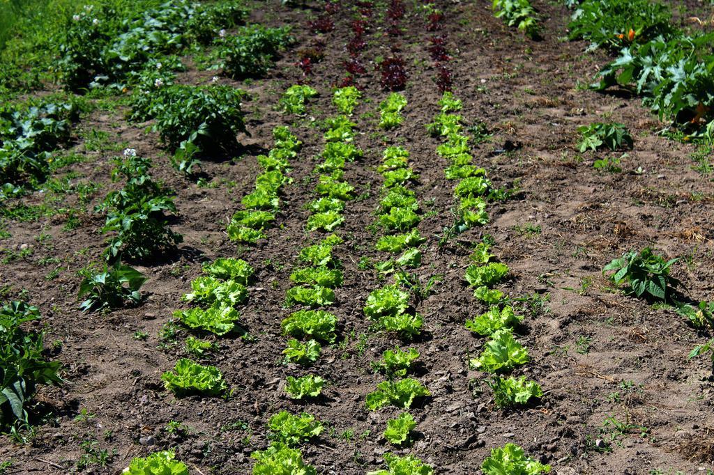 Producent Kraina Natury- Gospodarstwo Ekologiczne - zdrowa żywność blisko Ciebie