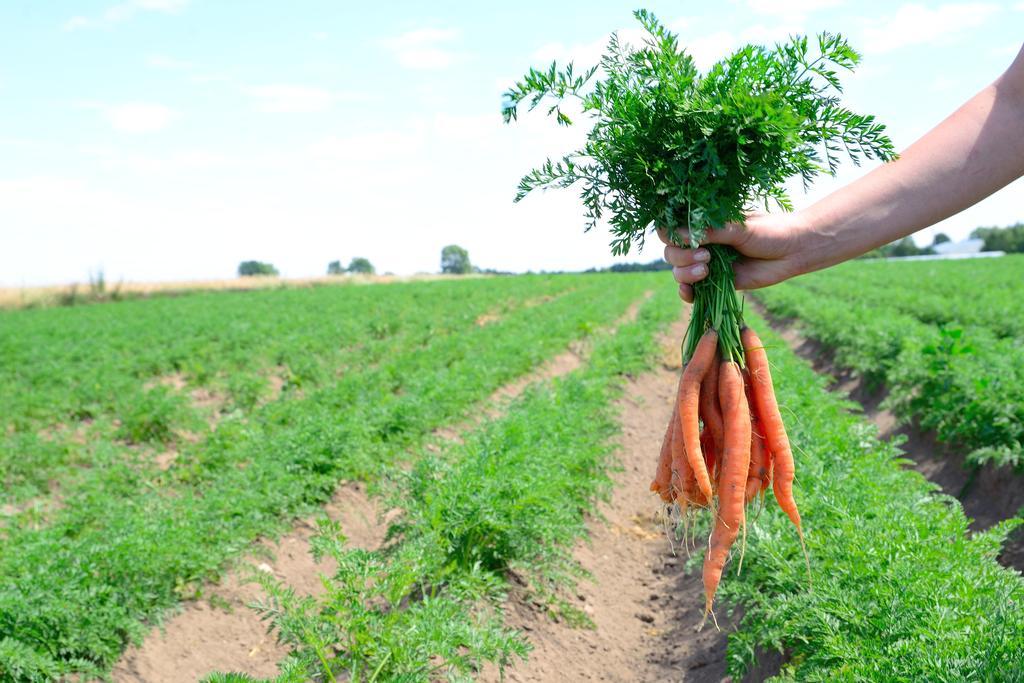 Producent Farma Świętokrzyska - zdrowa żywność blisko Ciebie
