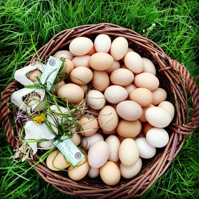 Producent Wiejskie jaja - zdrowa żywność blisko Ciebie