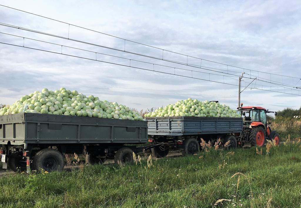 Producent Soska Gospodarstwo Rolno-Warzywne - zdrowa żywność blisko Ciebie