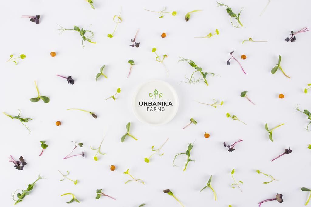 Producent Urbanika Farms Sp. z o.o. - zdrowa żywność blisko Ciebie