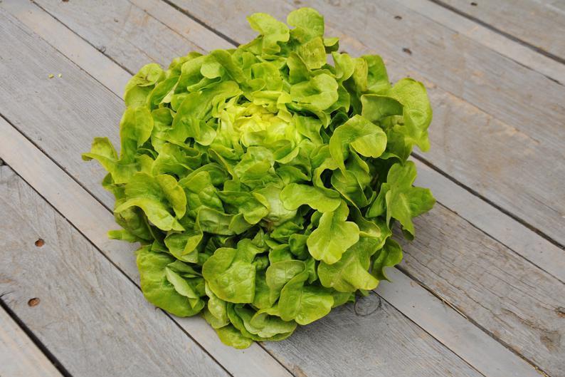 Produkt Sałata liść dębu zielona (EKO) - zdrowa żywność blisko Ciebie