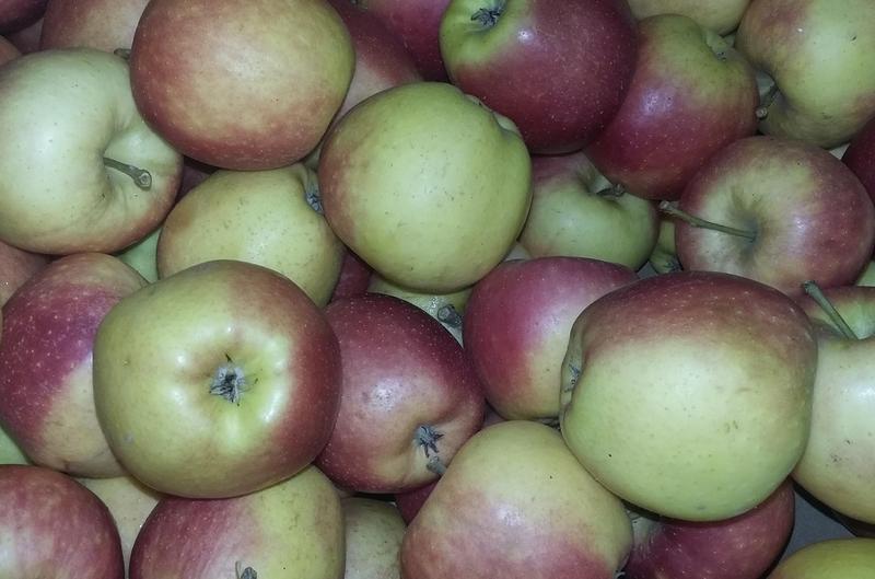 Produkt Jabłka Champion (EKO) - zdrowa żywność blisko Ciebie