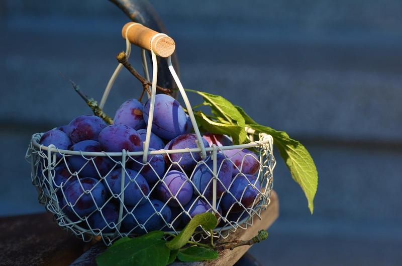 Produkt Śliwki mieszaniec (EKO) - zdrowa żywność blisko Ciebie
