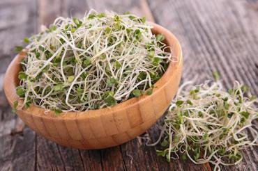 Produkt Kiełki Brokułów - zdrowa żywność blisko Ciebie