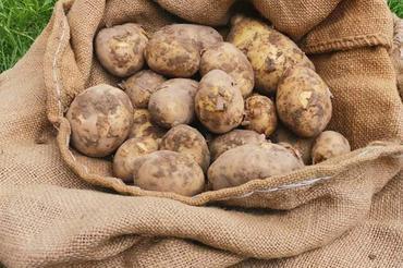 Produkt Ziemniaki MŁODE - zdrowa żywność blisko Ciebie