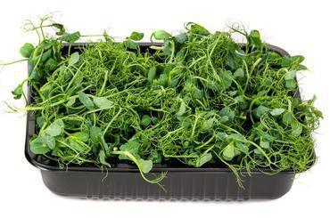 Produkt Mikrozioła: Groszek Wąsaty - zdrowa żywność blisko Ciebie