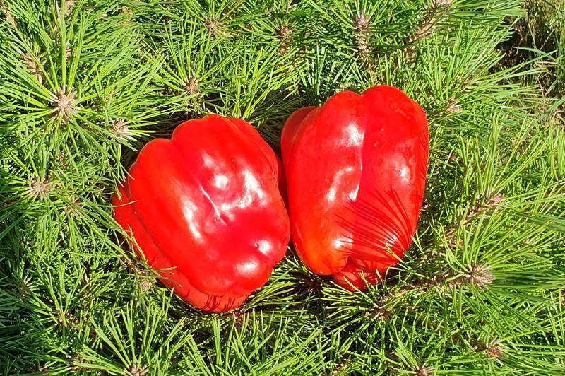 Produkt Papryka Czerwona (EKO) - zdrowa żywność blisko Ciebie