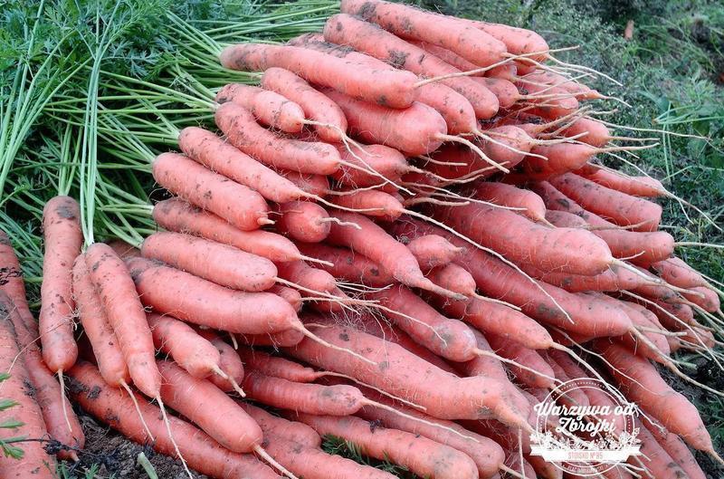 Produkt Marchew - zdrowa żywność blisko Ciebie