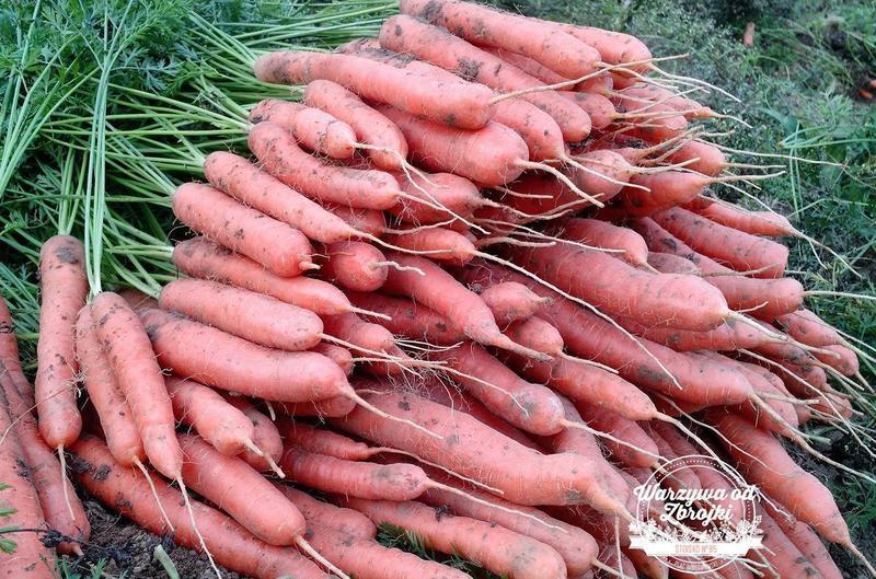 Produkt Marchew 5 kg - zdrowa żywność blisko Ciebie