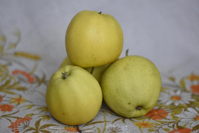 Produkt Jabłka Golden Delicious - zdrowa żywność blisko Ciebie
