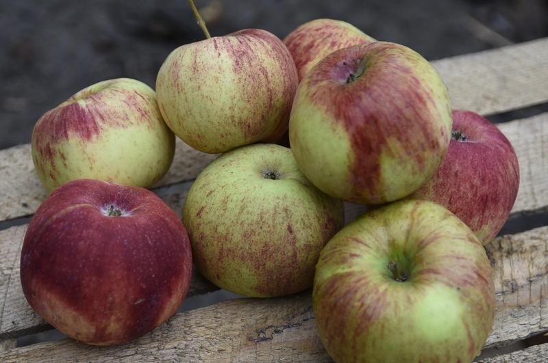 Produkt Jabłka Cortland - zdrowa żywność blisko Ciebie