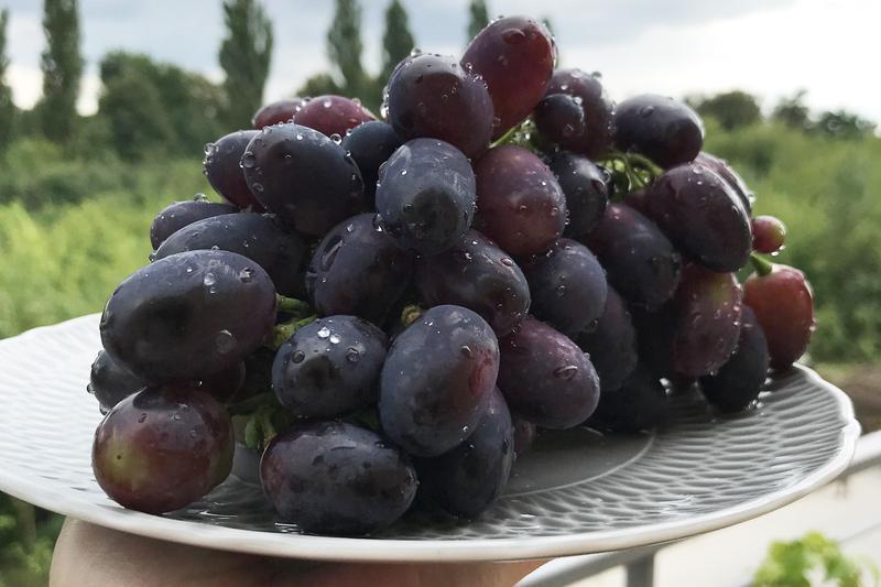 Produkt Winogrona (EKO) - zdrowa żywność blisko Ciebie