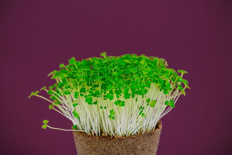 Produkt Brokuł - mikroliscie - zdrowa żywność blisko Ciebie